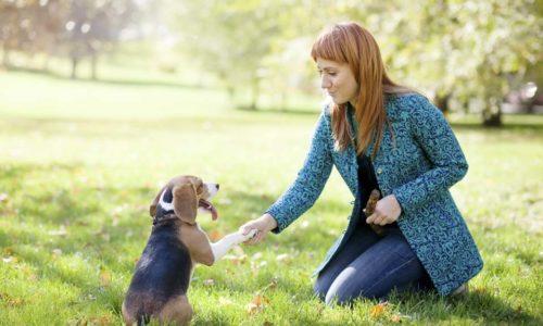 Consejos Para Pasear Un Perro